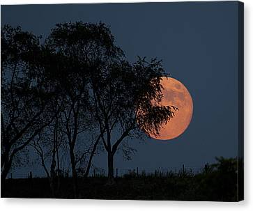Country Moon  Canvas Print by Betsy Knapp