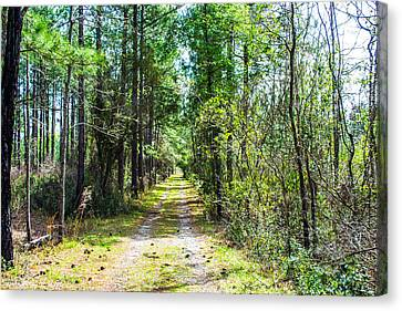 Canvas Print featuring the photograph Country Path by Shannon Harrington