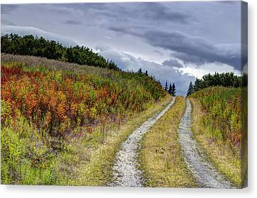Country Road In Fall Canvas Print by Michele Cornelius