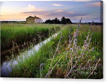 Countryside Landscape Canvas Print