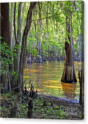 Cove At Caddo Lake Canvas Print by Gayle Johnson