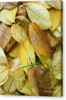 Covering The Green Canvas Print by Trish Hale