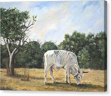 Canvas Print featuring the painting Cow by AnnaJo Vahle
