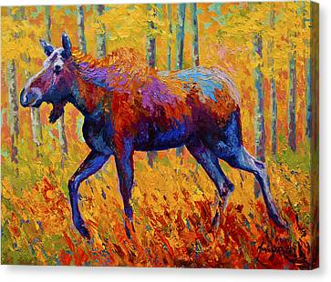 Cow Moose Canvas Print