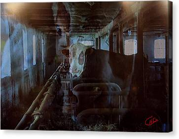 Cow Shelter Indoor Canvas Print by Colette V Hera  Guggenheim