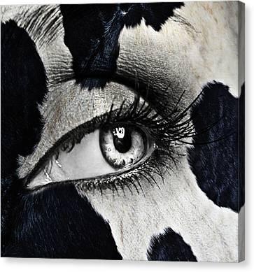 Cow Canvas Print by Yosi Cupano