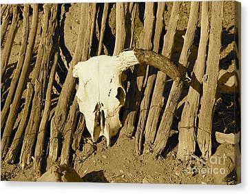 Cowskull - Sepia Canvas Print by Pamela Walrath