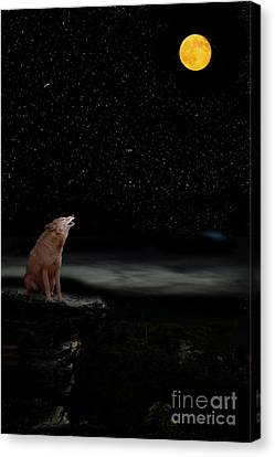 Canvas Print featuring the photograph Coyote Howling At Moon by Dan Friend