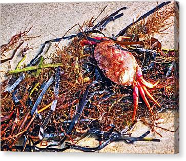 Canvas Print featuring the photograph Crab Boil by William Fields