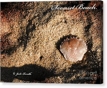 Canvas Print featuring the photograph Crab Shell 'sconset Beach Nantucket by Jack Torcello