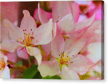 Crabapple Floral Paint Canvas Print by Donna Munro
