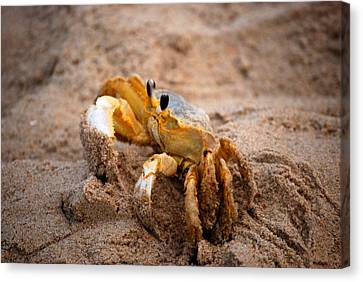 Canvas Print featuring the photograph Crabby by Linda Mesibov