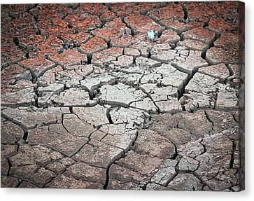 Cracked Earth Canvas Print by Athena Mckinzie