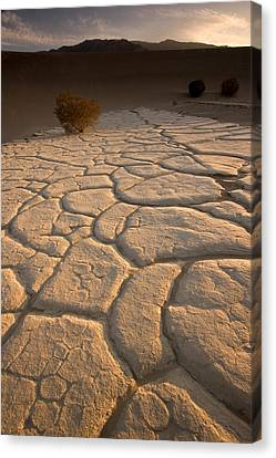 Cracked Mud Lies On Top Of The Sand Canvas Print by Phil Schermeister