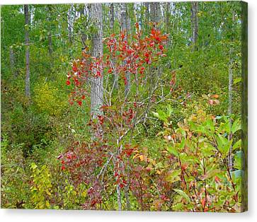 Canvas Print featuring the photograph Cranberries With Early Autumn Colors by Jim Sauchyn