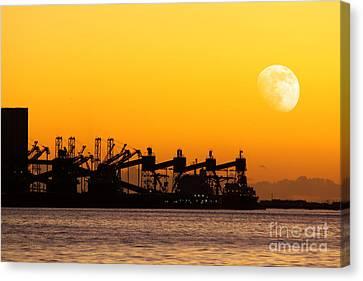Cranes At Sunset Canvas Print by Carlos Caetano