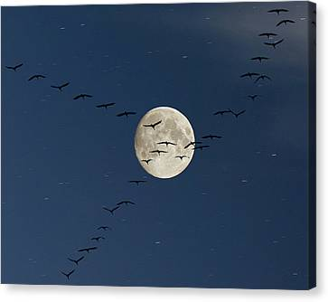 Cranes Flying To Moon Canvas Print
