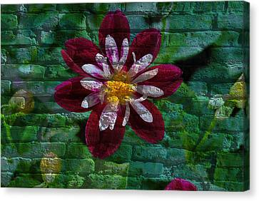 Crazy Flower Over Brick Canvas Print by Eric Liller