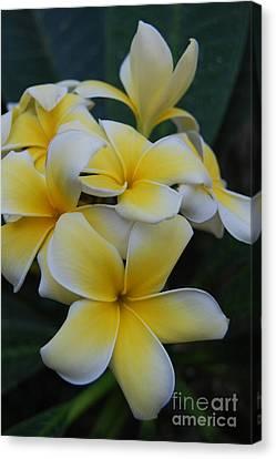 Creamy Yellow Flowers Canvas Print
