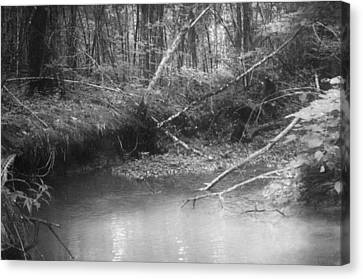 Creek Canvas Print by Floyd Smith