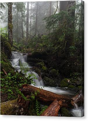Tranquil Canvas Print - Creek In The Mist by Mike Reid