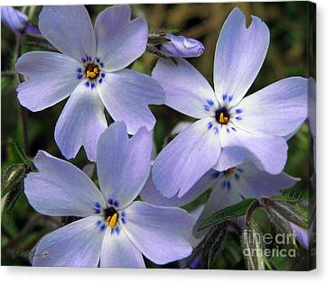 Canvas Print featuring the photograph Creeping Phlox by J McCombie