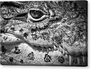 Creepy Crawler Canvas Print by James Woody