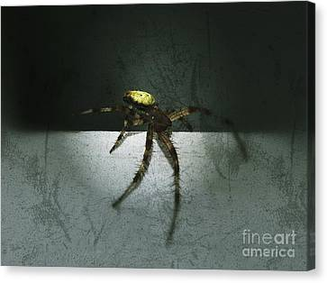 Creepy Spider Canvas Print by Christy Bruna