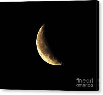 Crescent Close Up Canvas Print by Al Powell Photography USA