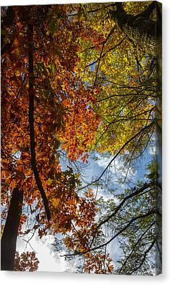 Autumn Leaf Canvas Print - Crimson And Gold by Rick Berk