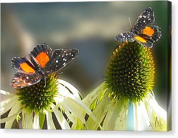Crimson Patch Butterfly Canvas Print