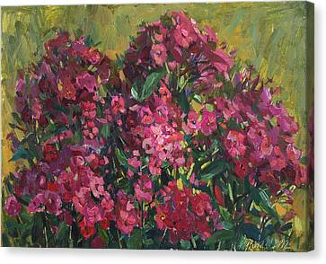 Crimson Phloxes Canvas Print by Juliya Zhukova