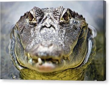 Crocodile Eyes Canvas Print by Ellen van Bodegom