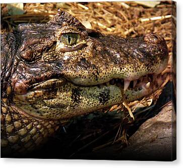 Canvas Print featuring the photograph Crocodile by Jeremy Martinson
