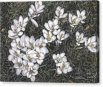 Crocus Flowers Canvas Print by Robert Goudreau