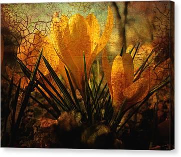 Crocus In Spring Bloom Canvas Print by Ann Powell