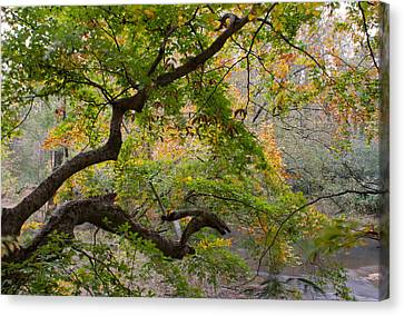 Crooked Limb Canvas Print