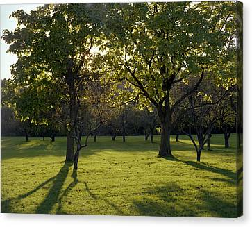 Cross In The Trees Canvas Print by John Bowers
