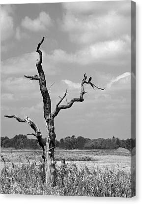 Canvas Print featuring the photograph Crow In Dead Tree by Brooke T Ryan