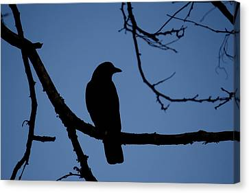 Crow Silhouette Canvas Print