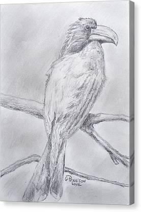 Crowned Hornbill Canvas Print by Gilbert Pennison