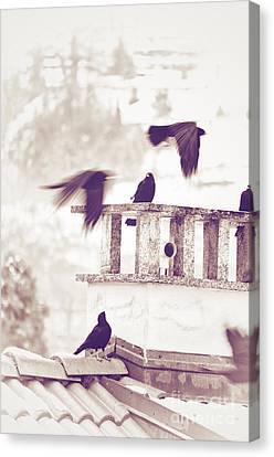 Crows On A Roof Canvas Print by Silvia Ganora