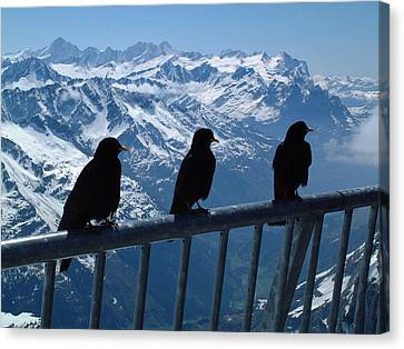 Crows On Top Of Mount Titlis Switzerland Canvas Print by Joseph Hendrix