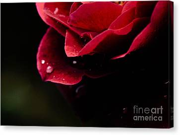 Canvas Print featuring the photograph Crying Rose by Tamera James