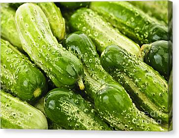 Cucumbers  Canvas Print by Elena Elisseeva