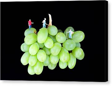 Cultivation On Grapes Canvas Print by Paul Ge