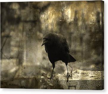 Curiosity Of The Graveyard Crow Canvas Print by Gothicrow Images