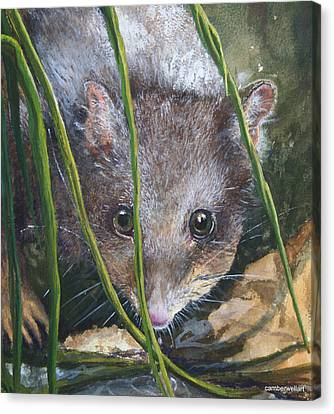 Curious - Northern Quoll Canvas Print by Jan Lowe