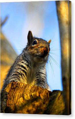 Canvas Print featuring the photograph Curious Fellow by John Chivers