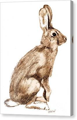 Curious Rabbit Canvas Print by Kristen Fox